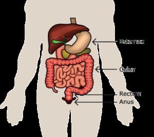 Vous allez avoir : une amputation abdomino-périnéale » SNFCP